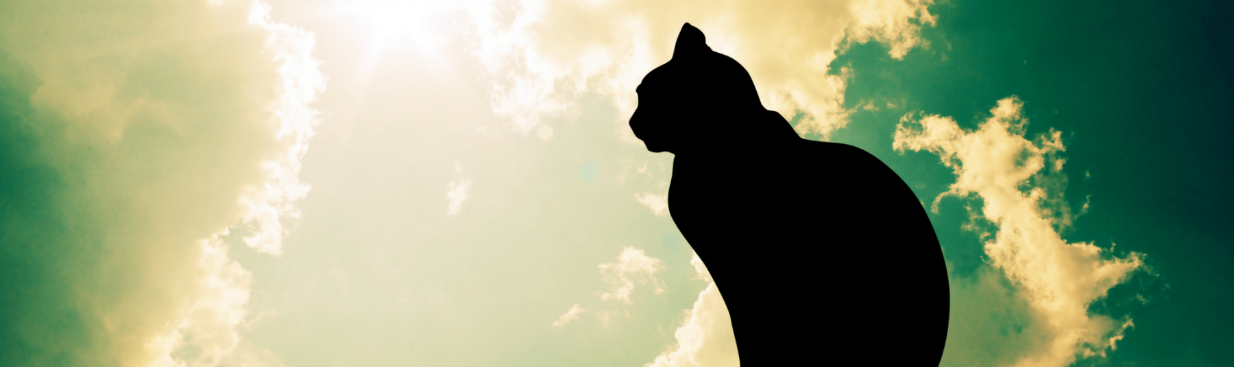 Silhouette of a cat in the sky