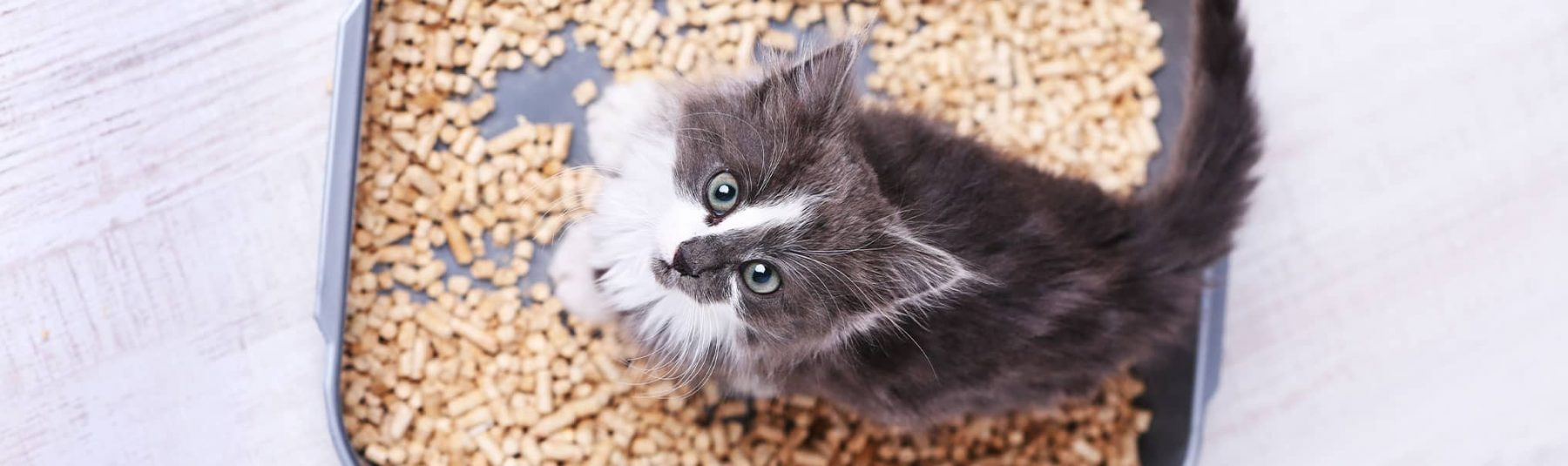 Kitten standing in litter box