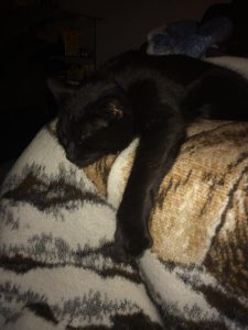 Black cat sleeping on a blanket