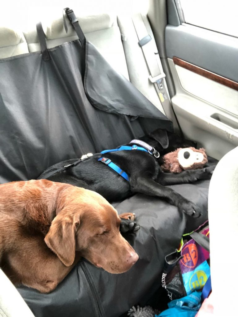 Two dogs sleeping in the back seat of a car