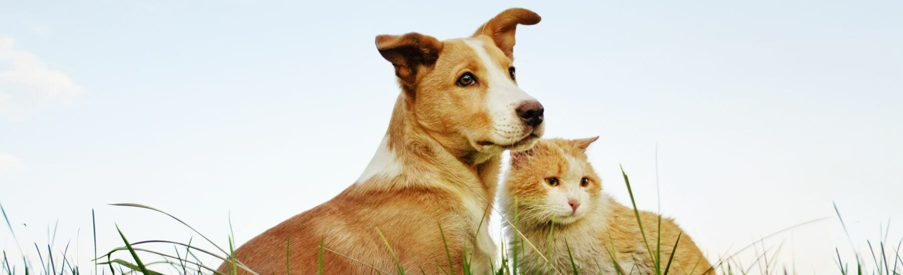 Dog and cat sitting in grass
