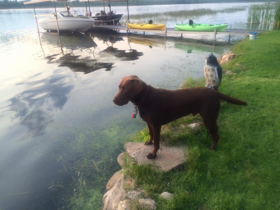 Easton the dog standing by the lake