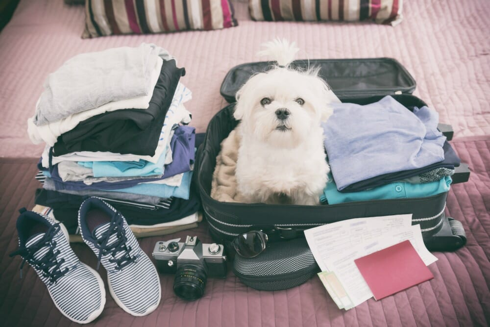 Dog sitting in packed suitcase